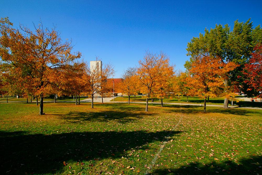 Irving Park Neighborhood Photo